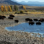 Wild, Wild West and Yellowstone Family Adventure - July 7-13, 2012 - Photo Memories
